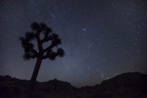 Stargazing in Joshua Tree National Park - NPS/Hannah Schwalbe