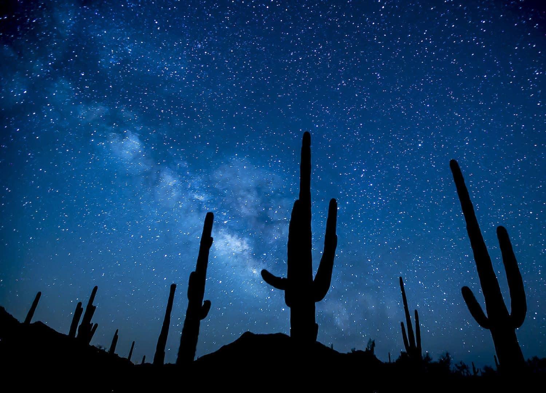 Stargazing in Tucson - Saguaro National Park - Bob Wick for BLM via Flickr