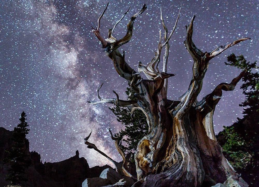 Stargazing in Great Basin - Bristlecone under the Milky Way